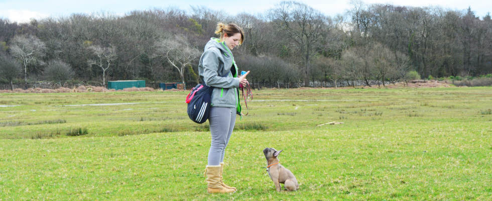a picture of puppy & dog trainer Gemma with a puppy in a field during a training class